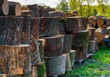Van boom tot Mooi Stookhout